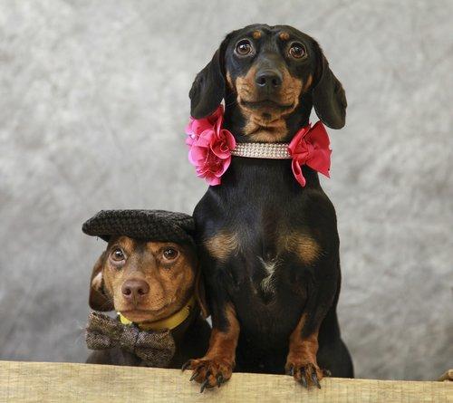 pup  dog  cute