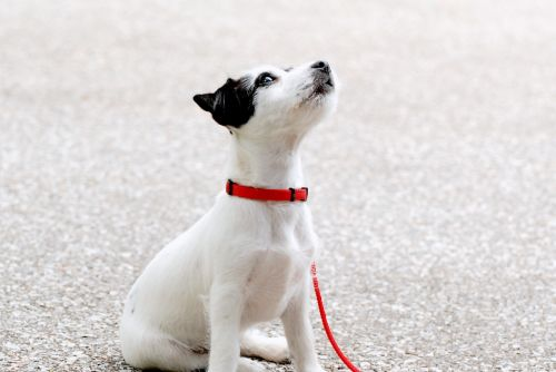 pup young black white dogs cute