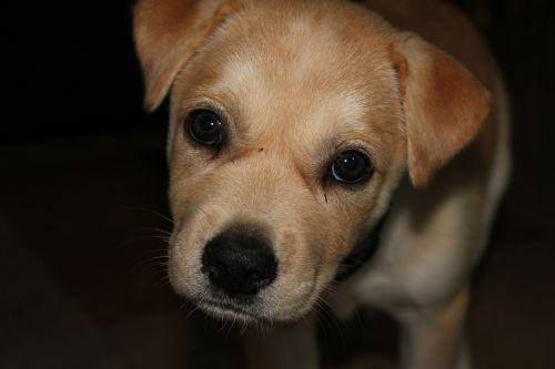 puppy sad cute