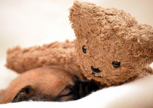 puppy sleeping dog