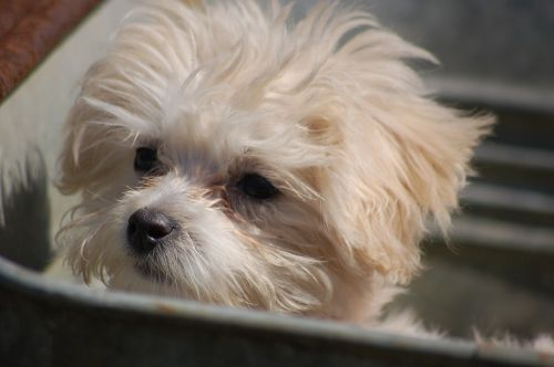 puppy animal dog