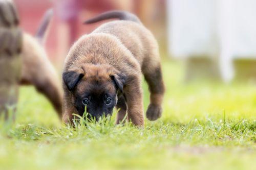 puppy sweet cute