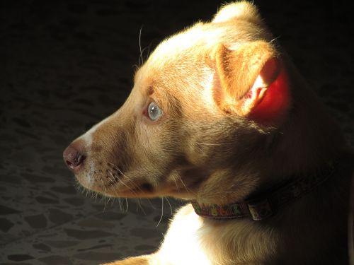 šuniukas,veisimas,šuo,naminis gyvūnėlis,saulė,poilsis