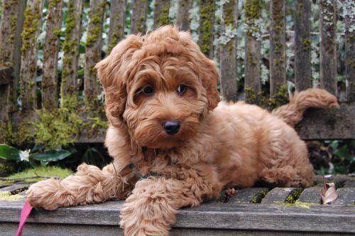 puppy bench mossy