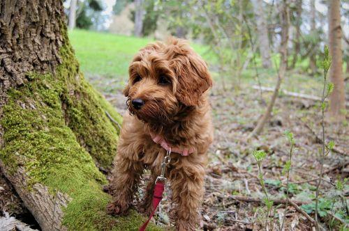 puppy exploring mossy tree