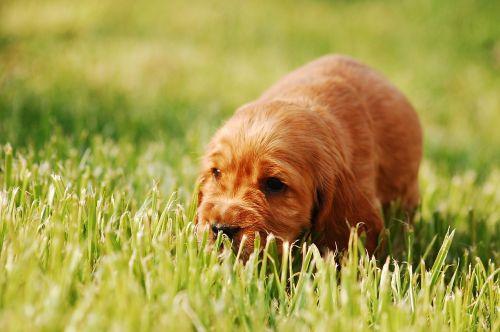 puppy dog doggy