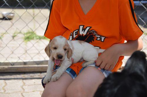 puppy brown white