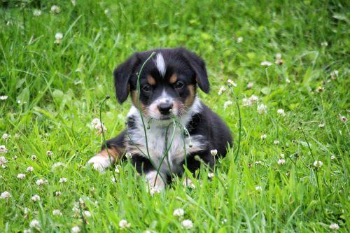 puppy doggy grass