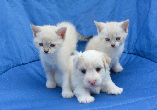 puppy cats dogs kittens