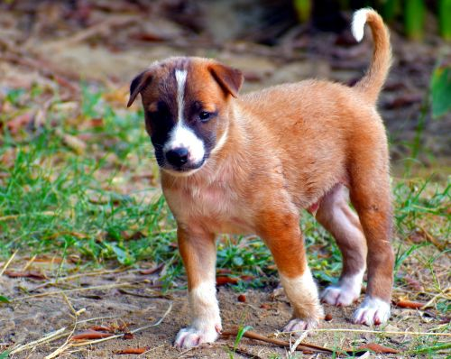 puppy pup dog