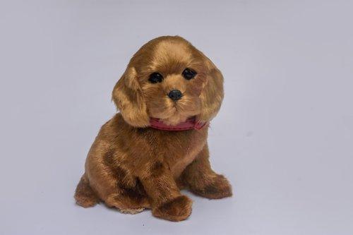 puppy  teddy  adorable