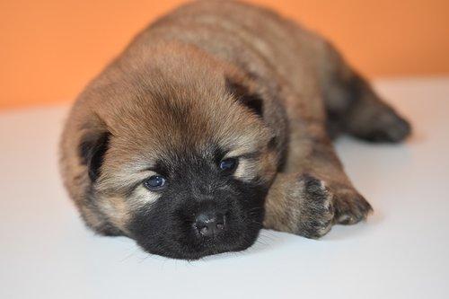 puppy  dog  bitch