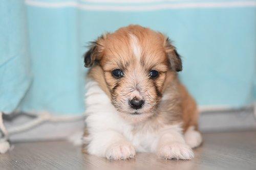 puppy  puppy female  pup