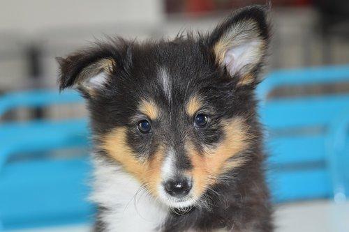 puppy  pup  dog portrait