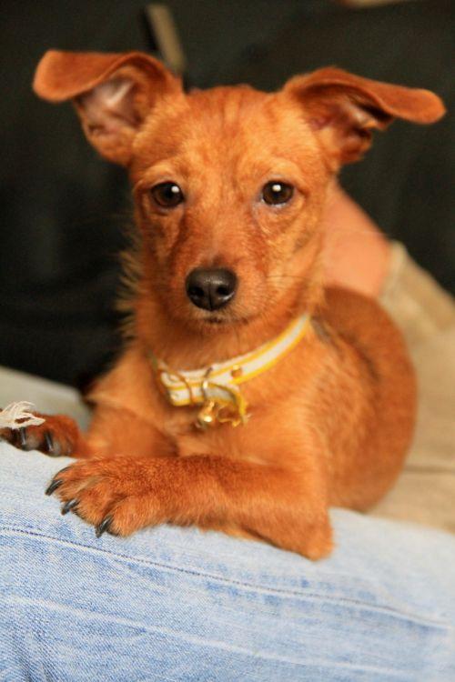 puppy mascot dog