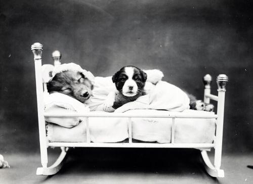 Puppy Bedtime Vintage Photo
