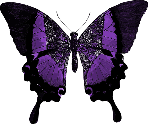 purple butterfly colorful