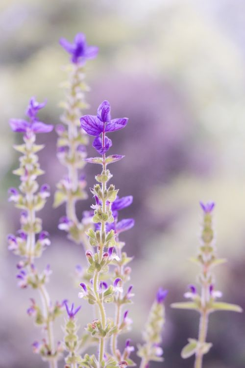 purple pastel soft