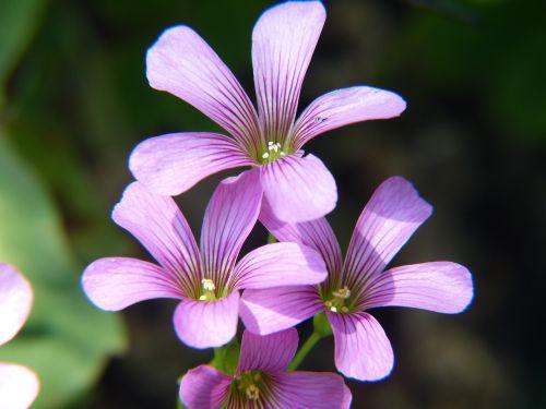 purple flowers purple flower
