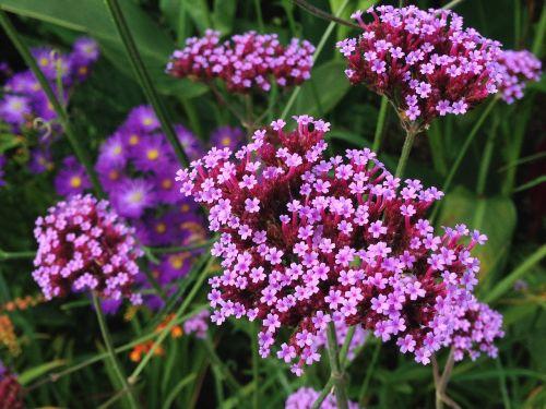 purple flowers tiny