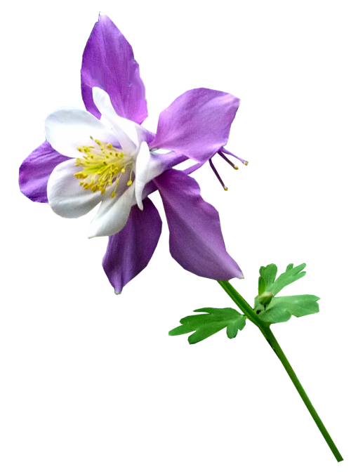 purple flower stem