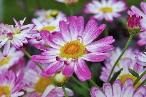 purple  plant  close up