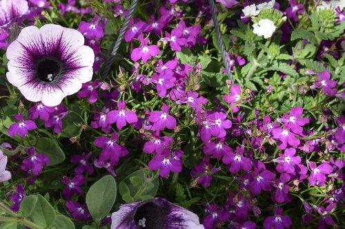 purple  flower  flowers