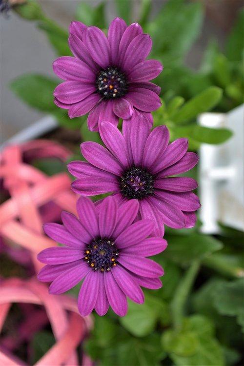 purple  flower  purple flower