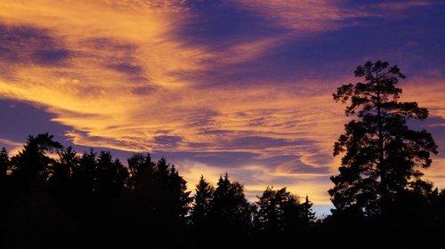 purple  skies  sunset