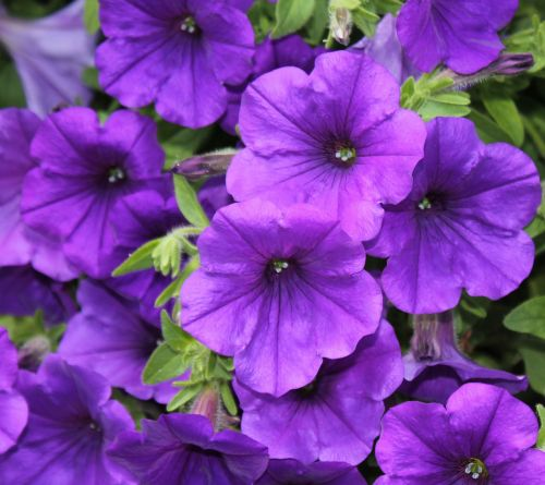 purple flower flower blossom