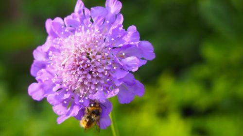 purple flower bee nature