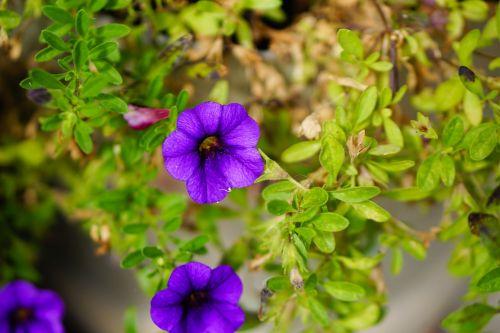 purple flower flower leaves