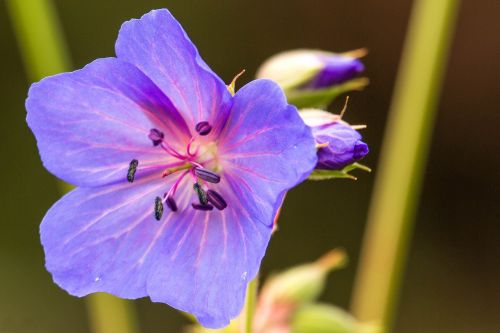 purple flower blossom bloom