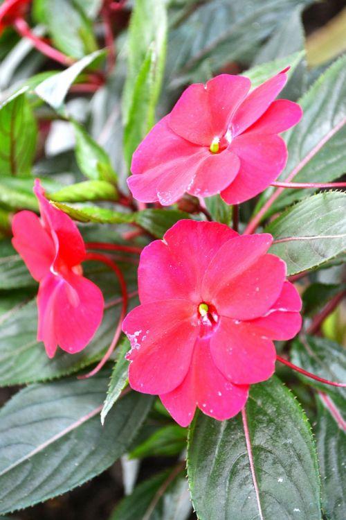 purple flower garden flower garden