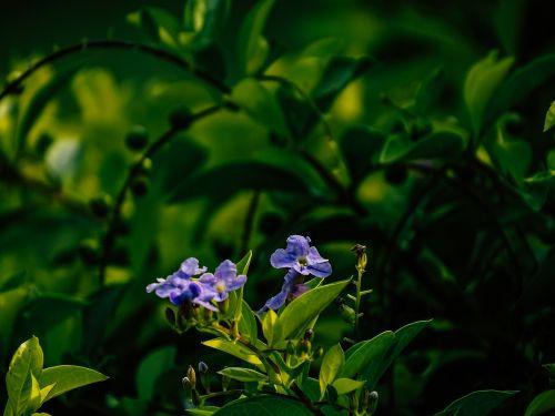 purple flower flower spring