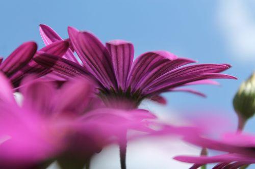 purple flower blue sky purple