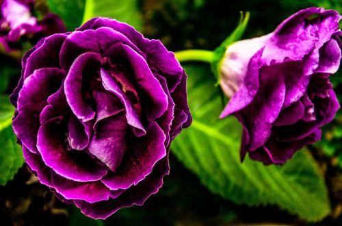 purple flower flower purple