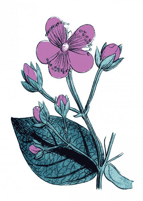 Purple Flower Illustration