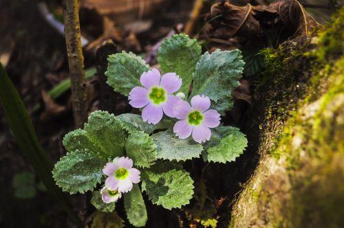 purple flowers flora flower