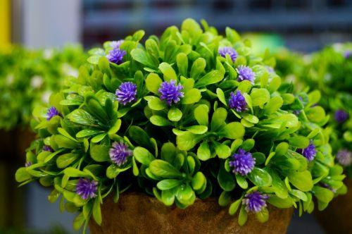 purple flowers flower vase flower