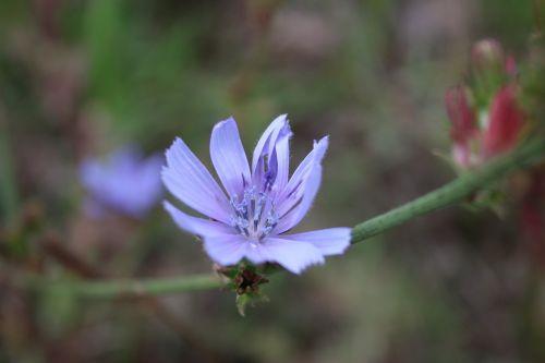 purple flowers nature purple