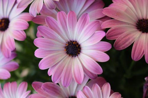 purple flowers violet flowers pink flowers