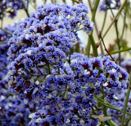 Purple Flowers In A Bunch