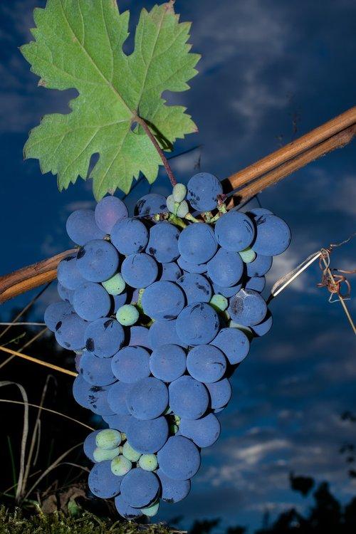 purple grapes  grapes  berries