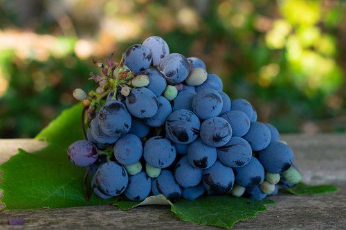 purple grapes  grapes  napa valley