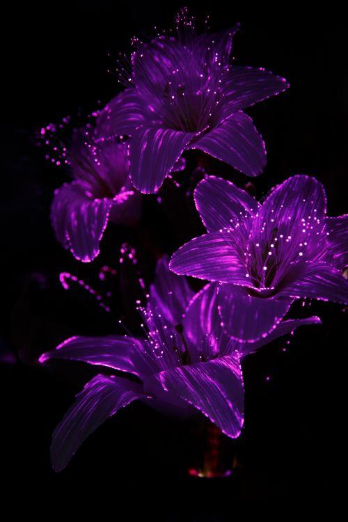 Purple Light Flowers