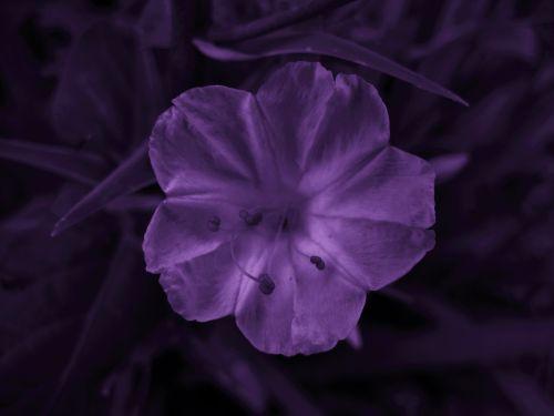 Purple Tinted Wild Flower