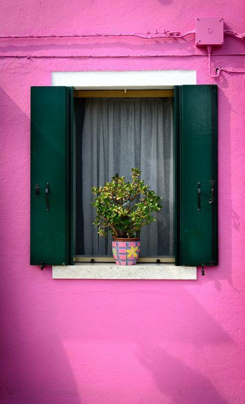purple window home balcony plants