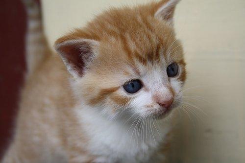 pussycat  animal  kitten