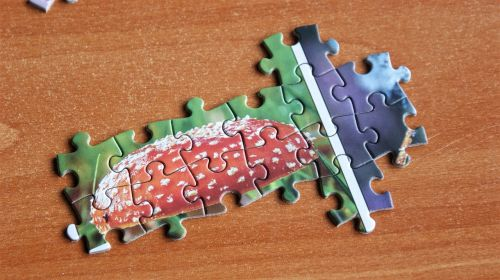 puzzle pieces of the puzzle search